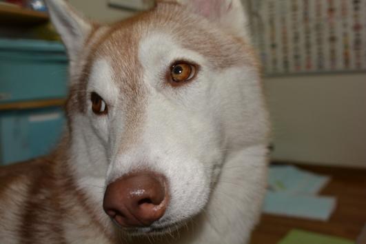 141014 犬パン06