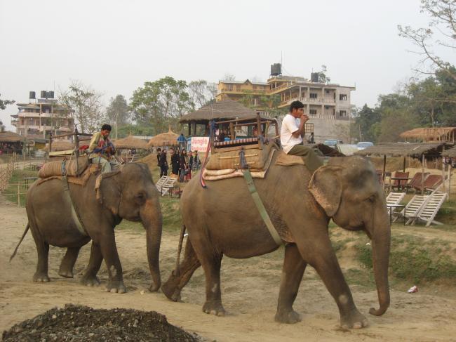 1103村を歩く象