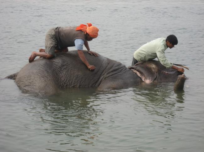 1104川で体を洗う