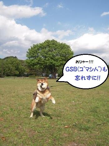 20130530-03.jpg