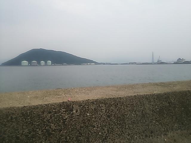 鷹島エギング9