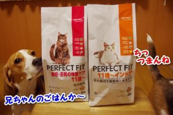 タメ 猫フード1
