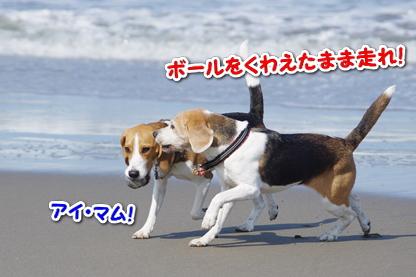 マラソン 6
