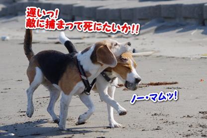マラソン 8