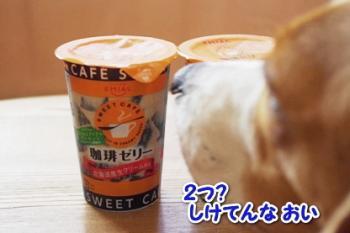 モラ コーヒーゼリー1