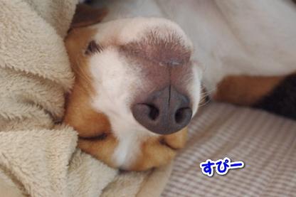 お休み 2