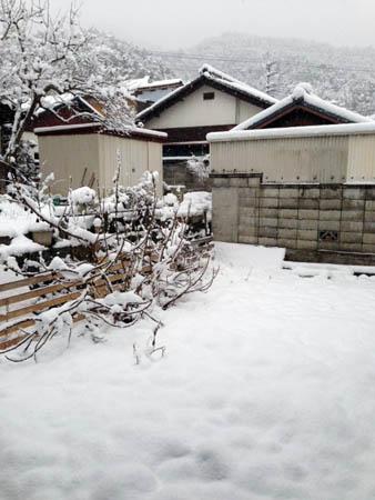 裏庭2014.2.8①