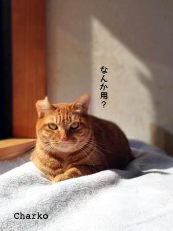 窓辺のちゃーこ2014.2.22②