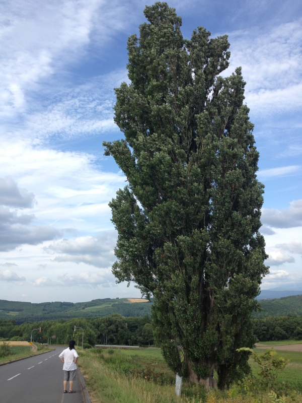 愛のスカイライン ケン&メリーの木