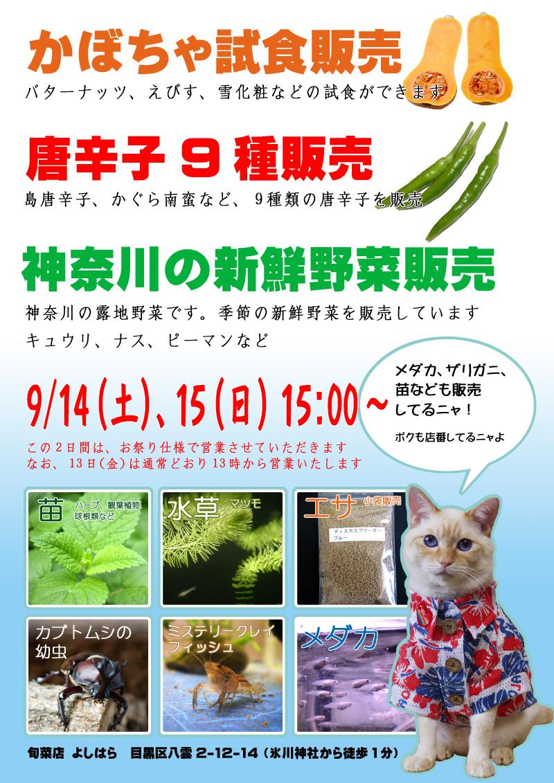 氷川神社大例祭(2013)でお店を出します