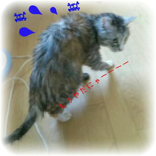 PicsArt_1372676828680.jpg