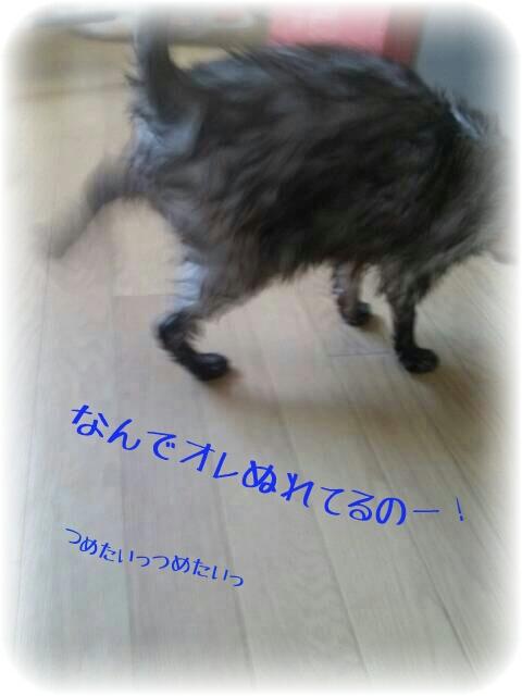 PicsArt_1372677901807.jpg