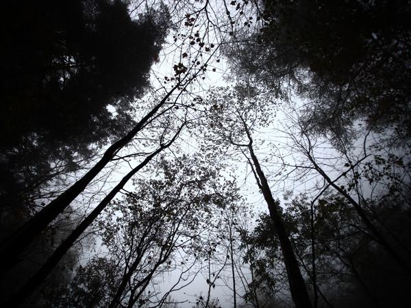 2013_1020_mizugaki7.jpg