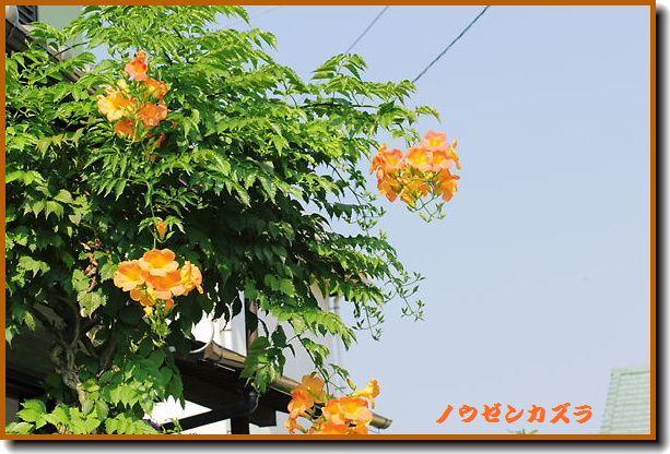 IMG_0928 A1