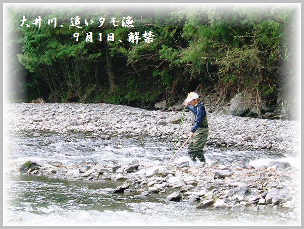 鮎 (2)2011.06.30