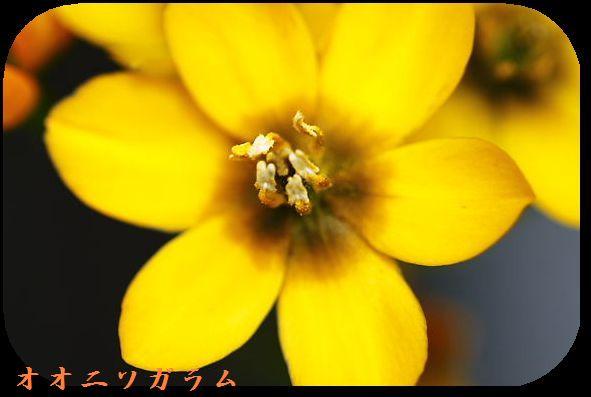 IMG_8429D1.jpg