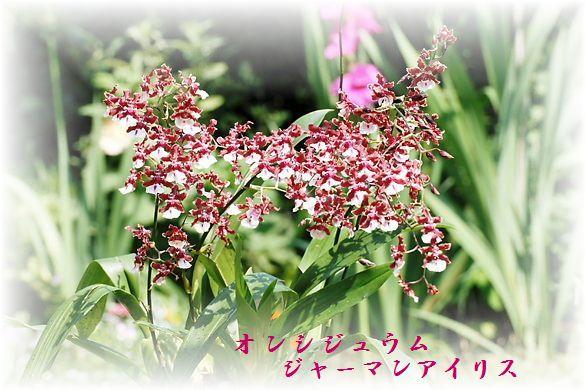 IMG_8565B1.jpg