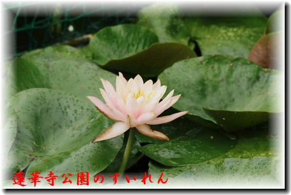 IMG_8689B2.jpg