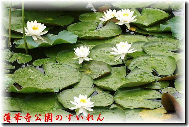IMG_8710B1.jpg