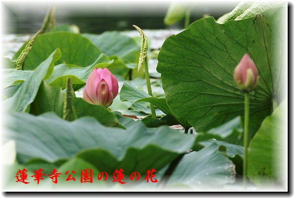 IMG_8717A1.jpg