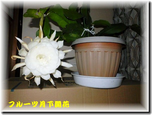 P7170017A1.jpg