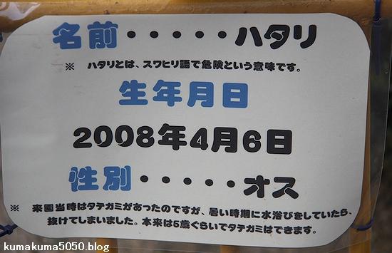 池田動物園_10