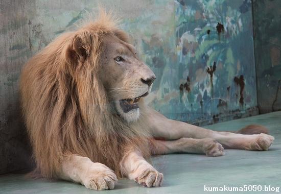 ホワイトライオン_66