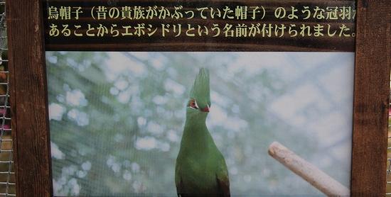 神戸花鳥園_20