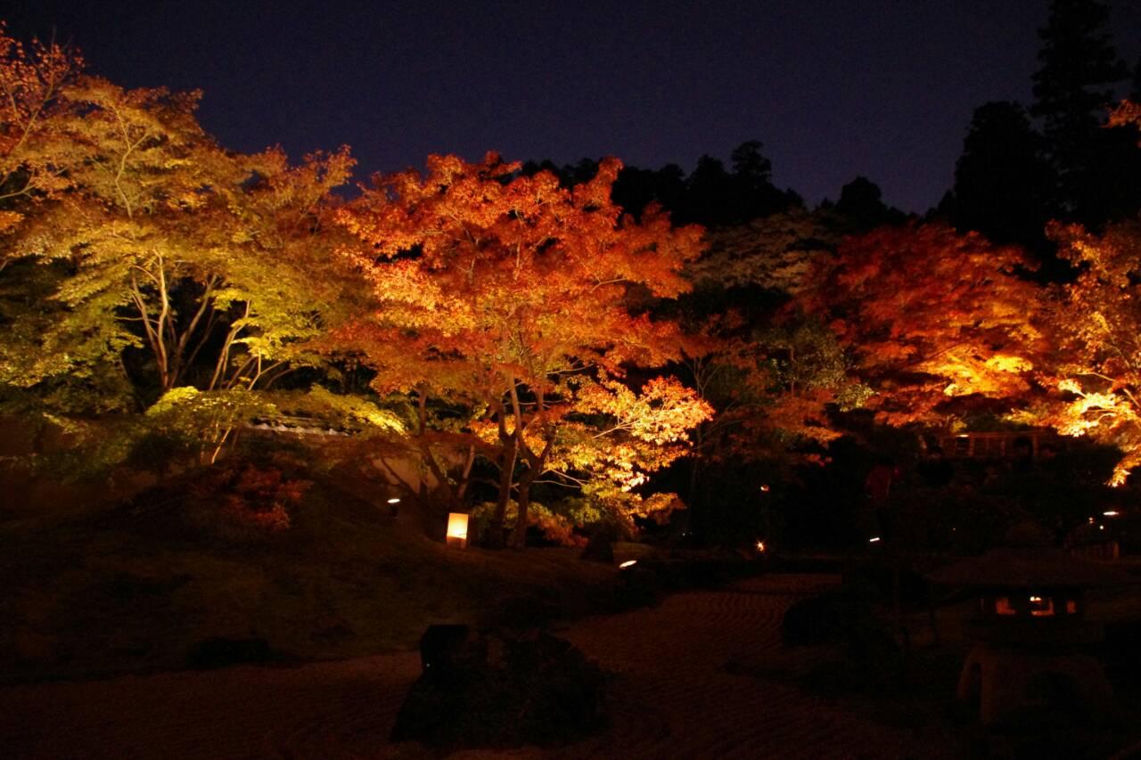 松島ライトアップ