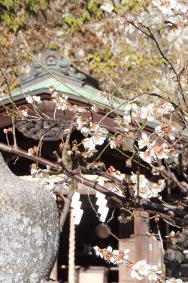 宇賀福神社(銭洗弁財天) 031
