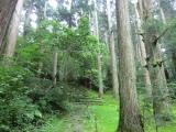 平泉寺白山神社7