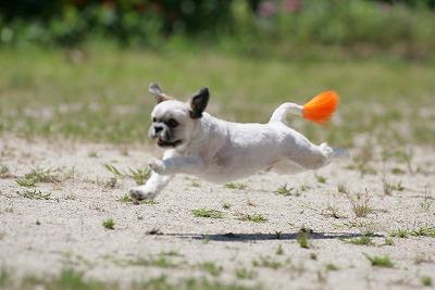 飛行犬 039