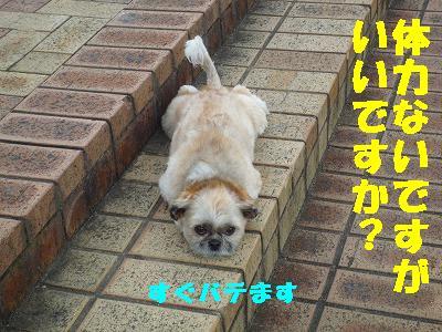 P1100516_20130520183016.jpg