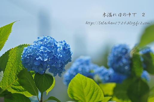 20130608092837bdd.jpg