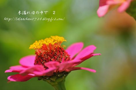 20130722094138eaf.jpg