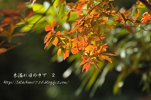 20131120125339002.jpg