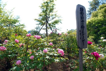 ☆DSC_0032