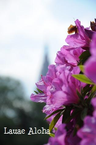 いろいろ花盛り♪