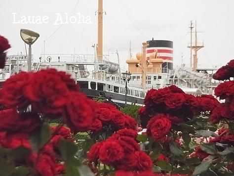 氷川丸とバラ