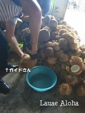 ココナッツの山
