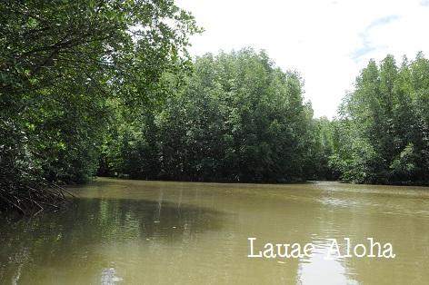 小舟でマングローブ原生林へ