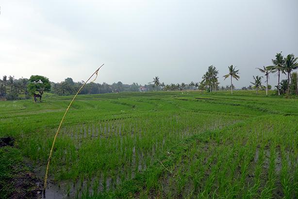 iburumah13-P1000083.jpg
