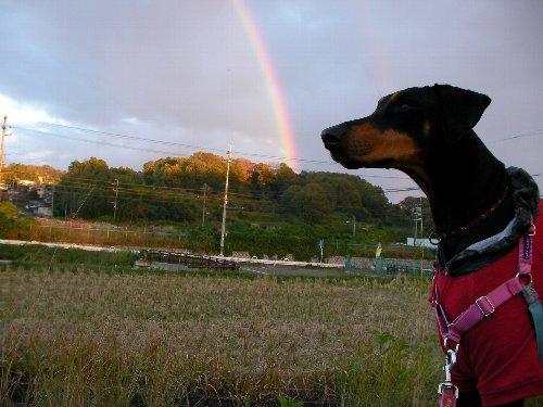 20131113・16:50アイリーンと虹①-1