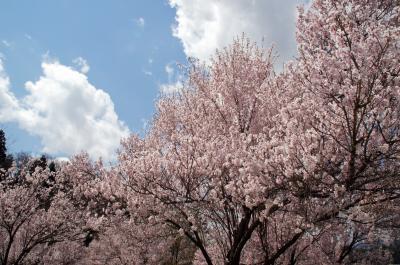 13-4-28桜