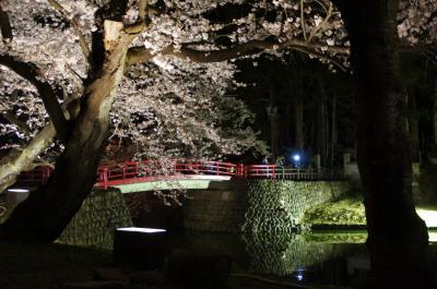 13夜桜2