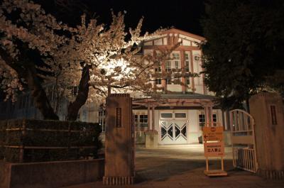 13夜桜5