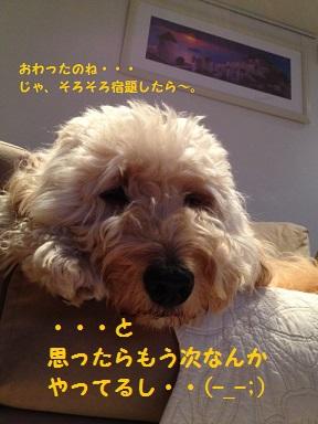 IMG_6729_201311131922199d0.jpg