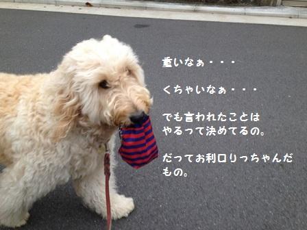 IMG_9502.jpg