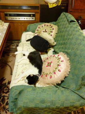 chibi+on+sofa+tate_convert_20130711140821.jpg