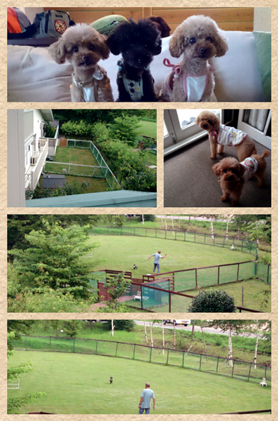 Collage 2013-08-02 09_58_54